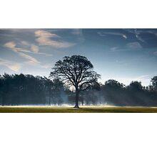 Backlit Tree Photographic Print