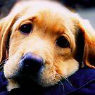 Puppy Eyes by Nancy Stafford