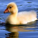 Duckling by Debbie Sickler