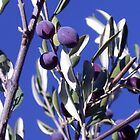 October Olives 1 by ZELLEN