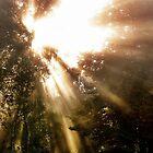 Light triumphant by LadyFi