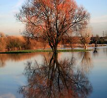 Reflections on Flooded Park, Leicestershire by fenster