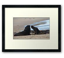 Go on Kiss me! - NZ Sea Lion - Rapika - Rare Framed Print