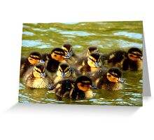 We're Fluffy Jewels - Ducklings - NZ - Southland Greeting Card