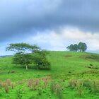 Dorrigo Farmland Pano by Michael Matthews