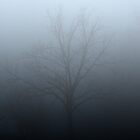 foggy tree by rebecca smith