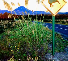 Kiwi Crossing NZ by kevin smith  skystudiohawaii