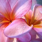 Frangipani Pink II by Kathie Nichols