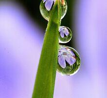 Flower Refractions in Dew Drops by Debbie Sickler