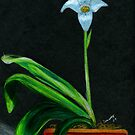 Blue Orchid In A Terra Cotta Pot by Carliss Mora