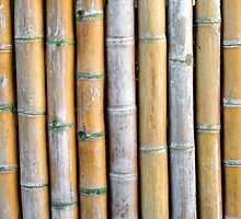 Bamboo fence by yulia-rb