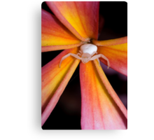 Crab Spider on Frangipani 2 Canvas Print