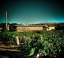 Penfold Winery by Jonathan Yeo