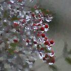Ice berries through a filter by Nicki Kenyon