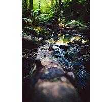 Logged on Photographic Print