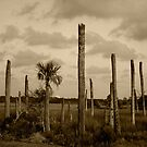 After the Hurricane, Florida by heatherfriedman