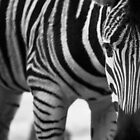 Stripes and more stripes by caradione