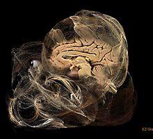 metaphysical phenomenology by EZGrant