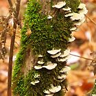 Moss and Fungi by lorilee