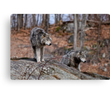 Timber Wolves on Rocks Canvas Print