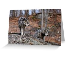 Timber Wolves on Rocks Greeting Card