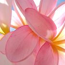 Frangipani Pink 3 by Kathie Nichols