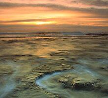 Rising Tide by Joel  Haldane
