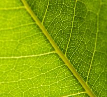 Photosynthesis by Cropfactorgroup