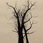 Silhouetted Grove by Nicoletta37