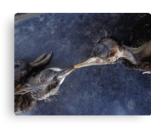 The death kiss of two birds Canvas Print