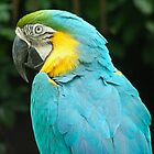 Pretty Bird by Mary  Lane