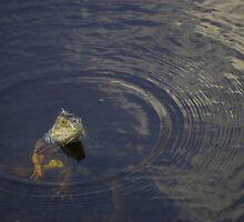 Iguana in the Water by Bahoke