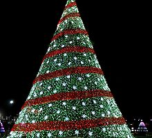National Christmas Tree, DC, 2014 by Kelly Morris