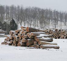 Snow Lumber by Sue Ellen Thompson