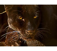 Obsidian Silk - Black Leopard Photographic Print