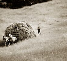 hayride by Lorne Chesal