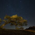 Leaning Live Oak, Stars of Orion, Taurus, Pleiades by A.M. Ruttle