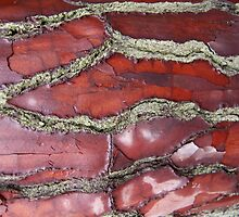 Cracked bark by Charlotte Rose