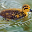 Young Duck in Evening Sunlight by Joyce