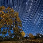 Startrails over Live Oak by A.M. Ruttle
