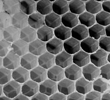 Honeycomb Detail by Nicole Petegorsky