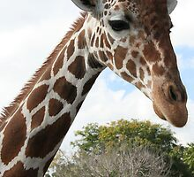 Graceful Giraffe by Susan Kopeck
