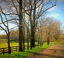 Trapp Branch Road in Spring by Cecilia Carr