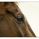 Eyeing a Winner by PaulH