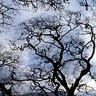 Bare Branches by Eils