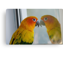 Tell me the truth, do I look fat in this! Sun Conure - NZ ** Canvas Print