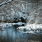 Winter Stillness by Lisa Bianchi