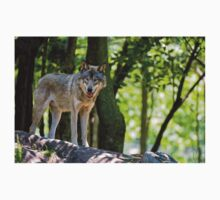 Timber Wolf on Rocks T-Shirt