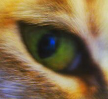 Eye of a Tiger in the Heart of a Tabby by justineb