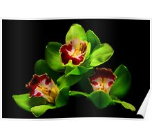 Green Orchids Poster